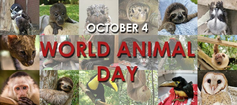 We started the month celebrating October 4th World Animal Day