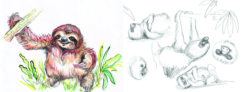 Sloth Drawing Class